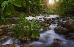 Azji Południowo Wschodniej dżungla z rzeką Zdjęcia Stock