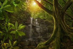 Azji Południowo Wschodniej dżungla z siklawą Obraz Royalty Free