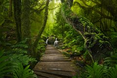 Azji Południowo Wschodniej głęboka dżungla zdjęcie royalty free