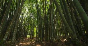 Azji Południowo Wschodniej głęboka dżungla obraz royalty free