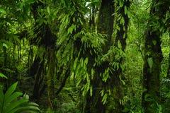 Azji Południowo Wschodniej głęboka dżungla obrazy royalty free