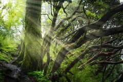 Azji Południowo Wschodniej głęboka dżungla zdjęcia stock