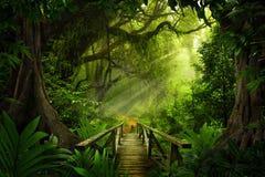 Azji Południowo Wschodniej głęboka dżungla obrazy stock