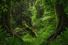 Azji Południowo Wschodniej głęboka dżungla zdjęcie stock