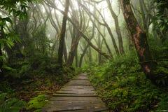 Azji Południowo Wschodniej głęboka dżungla zdjęcia royalty free