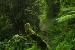 Azji Południowo Wschodniej głęboka dżungla fotografia stock