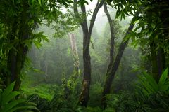 Azji Południowo Wschodniej głęboka dżungla fotografia royalty free