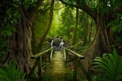 Azji Południowo Wschodniej głęboka dżungla obraz stock
