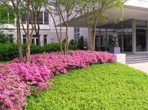 Azáleas no prédio de escritórios Foto de Stock Royalty Free