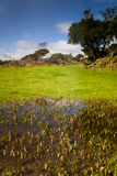 Azorean pastures stock photo
