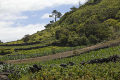 Azoren, βουνά στο νησί Pico Στοκ Εικόνα