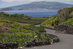 Azoren, νησί Pico Στοκ Εικόνα