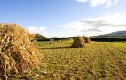 Azoren-Feld Lizenzfreies Stockfoto