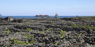Azoren gammal vingård på ön Pico Arkivbild