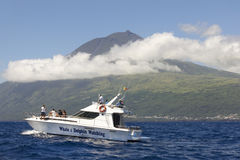 Azoren-Küstenlinienlandschaft in Pico-Insel mit dem Wal, der BO aufpasst lizenzfreies stockfoto