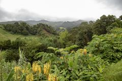 Azoren-Landschaft lizenzfreie stockbilder