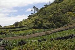 Azoren, montagne sull'isola Pico Immagine Stock