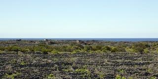 Azoren sikt över gammal vingård på ön Pico Arkivfoto
