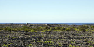 Azoren, widok nad starym winnicą na wyspie Pico Zdjęcie Stock