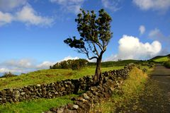 Azores. Typical view at the island of Sao Miguel Stock Photos