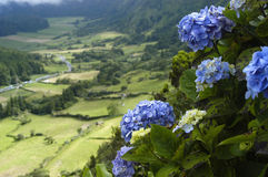 Azores. Flowers stock photo