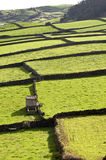 Azores Fields Stock Image