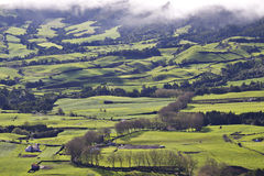 Azores: Green fields Royalty Free Stock Photo