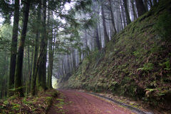 Azores: Green forest Royalty Free Stock Photos