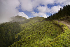 Azores: Green island Stock Images