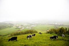 Azores Island - Portugal Stock Photo