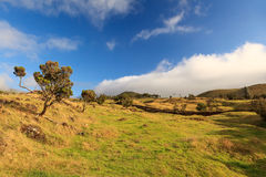 Azores landscape – grass, trees and blue sky. Azores landscape – grass, trees and blue cloudy sky royalty free stock photo
