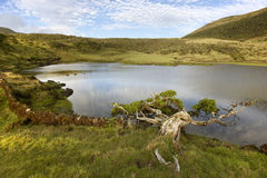 Azores landscape with lake and cedrus in Pico island, Portugal Stock Images