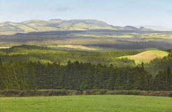 Azores landscape with meadows, forests and mountains in Terceira Stock Images