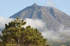 Azores landscape in Pico island. Pico peak and pine. Portugal