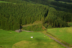 azores lasowi Obrazy Royalty Free