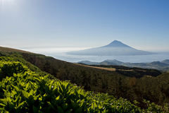 Mountain at sunrise. Azores, the mountain at sunrise, in the foreground meadow royalty free stock images