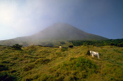 Azores - Pico volcano Stock Photos