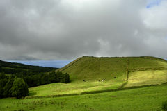 Azores. Typical view at the island of Sao Miguel Royalty Free Stock Images