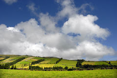 Azores. Typical view at the island of Sao Miguel Royalty Free Stock Photos