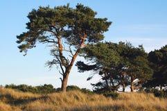 Azotado por el viento Fotos de archivo