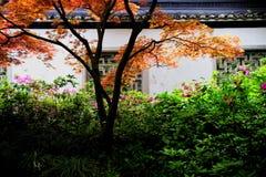 Azotea negra y pared blanca con el árbol colorido Fotos de archivo