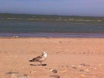 Azov θάλασσα στοκ εικόνες με δικαίωμα ελεύθερης χρήσης
