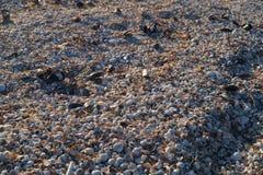 Shells at Azov sea sandy beach royalty free stock photography
