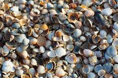 Azov seashells at sunset Stock Image