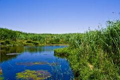 azraq Jordan oaza zdjęcie stock