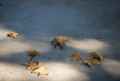 Azuis do outono Fotografia de Stock Royalty Free