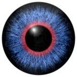 Azul - íris vermelha do olho Fotos de Stock