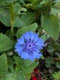Azul Zdjęcia Royalty Free