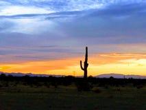 Azul anaranjado de la puesta del sol solitaria del cactus foto de archivo