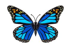 Azul bonito borboleta colorida Fotos de Stock Royalty Free